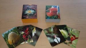 花カード診断