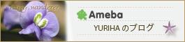 Amaba YURIHAのブログ