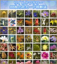 花カード 88枚