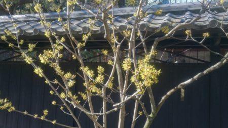 冬から春へ「なんとなく不安定と感じる方へ」~ LIFEワイルドフラワーエッセンス