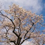 「変容」春はいのちの再生の時