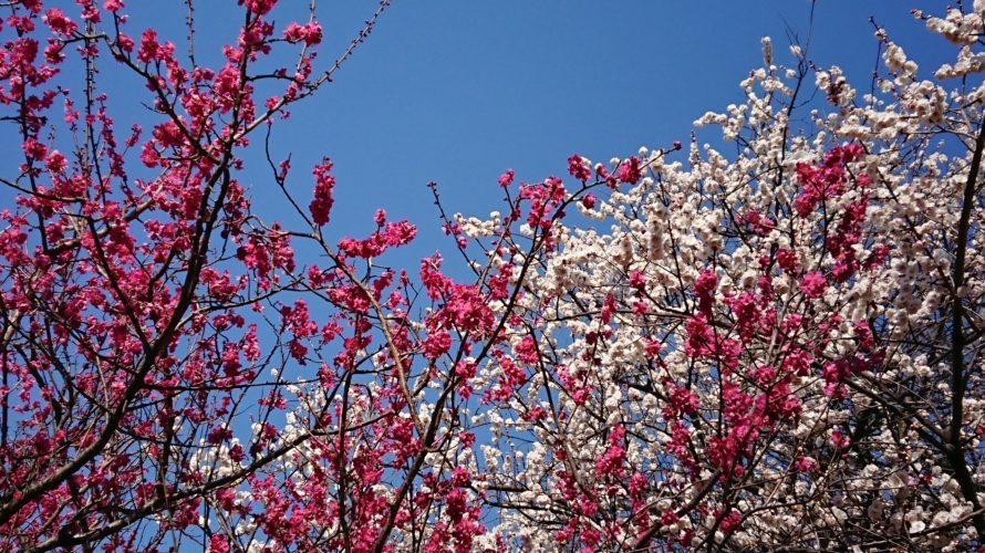 梅の花のエネルギーに助けられて